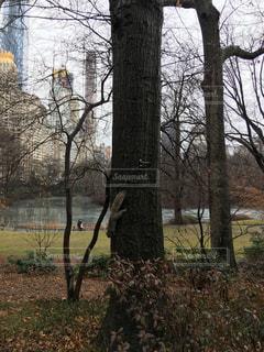 ニューヨーク セントラルパークの木に登っているリスの写真・画像素材[1002475]
