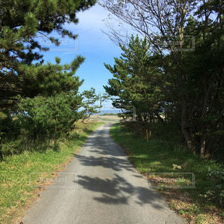 三沢の海が見える道路の写真・画像素材[1454526]