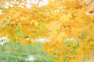 秋の写真・画像素材[844161]