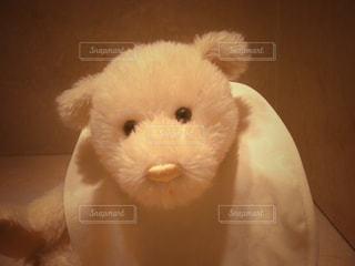 可愛いくまちゃん (Teddy bear)の写真・画像素材[850236]