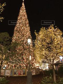 クリスマス ツリーの写真・画像素材[872483]