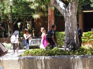 ロサンゼルスウェストウッド (Westwood)の写真・画像素材[914084]