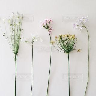 花あそびの写真・画像素材[844715]