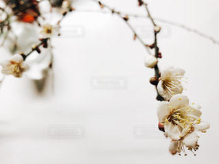 テーブルの上の花の花瓶の写真・画像素材[1756406]