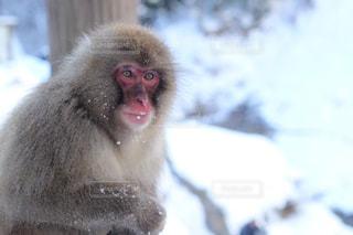 近くに猿のアップの写真・画像素材[845060]