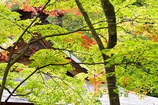 鹿教湯温泉の秋の写真・画像素材[845074]