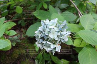 庭園の緑の植物の写真・画像素材[845092]