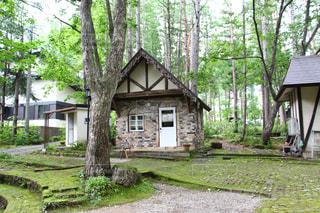 裏庭の木と家の写真・画像素材[845095]