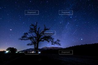 やまなしの木と冬の天の川の写真・画像素材[845320]