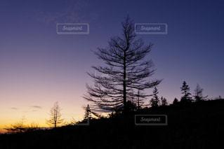 背景の夕日とツリー - No.852588