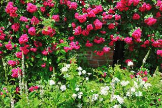 近くのフラワー ガーデン。の写真・画像素材[847479]