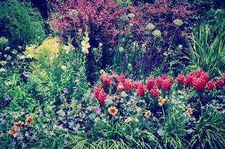 近くのフラワー ガーデン。の写真・画像素材[847483]