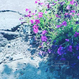道端のお花。の写真・画像素材[847486]