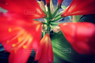 お花のアップ。の写真・画像素材[847512]