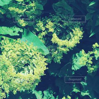 庭園の緑の植物。の写真・画像素材[847515]