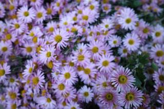 近くの花のアップの写真・画像素材[858018]