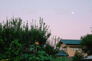 家の前に木の写真・画像素材[871904]