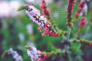 近くの花のアップの写真・画像素材[871912]