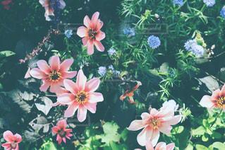 近くの花のアップの写真・画像素材[871919]