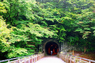 下り列車を走行する列車は森の近く追跡します。の写真・画像素材[901018]