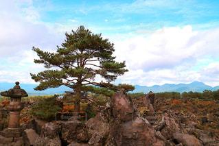 近くに大きな岩のアップの写真・画像素材[901141]
