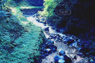 森の水中ビューの写真・画像素材[901144]