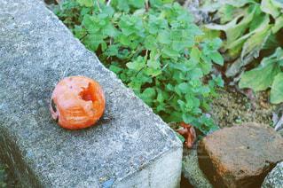 岩の上に座ってドーナツの写真・画像素材[1069392]