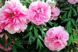 花のクローズアップの写真・画像素材[2122083]