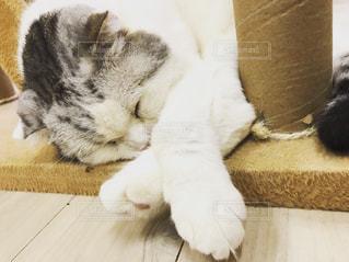 お昼寝中の猫の写真・画像素材[2303462]