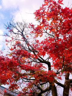 紅葉と空🍁の写真・画像素材[2303529]