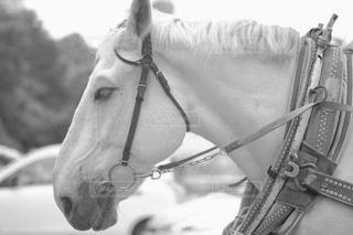 白い馬の写真・画像素材[846060]