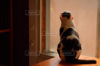 窓を眺める猫の写真・画像素材[846122]