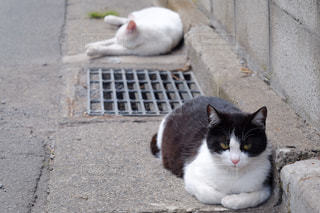猫の写真・画像素材[846139]