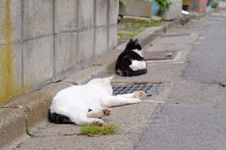 歩道の上に横たわる猫の写真・画像素材[846140]