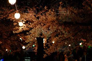 夜桜と灯りの写真・画像素材[846141]