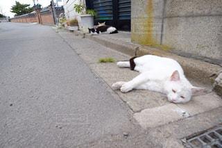 猫の写真・画像素材[846158]