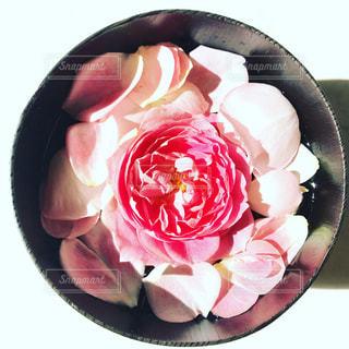rose♡の写真・画像素材[846677]