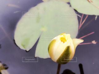 花開くとき…🌟の写真・画像素材[850194]