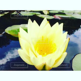 近くの花のアップの写真・画像素材[851770]