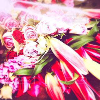 HAPPY ROSE♡の写真・画像素材[854277]