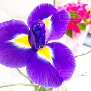 近くの花のアップの写真・画像素材[869651]