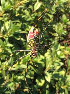 枝の上に蜘蛛の写真・画像素材[846887]