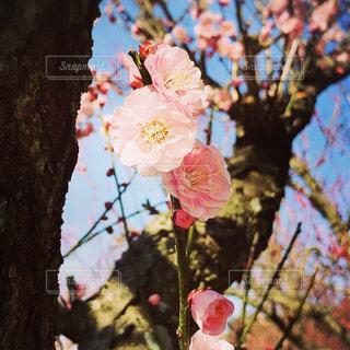 花の写真・画像素材[387171]