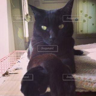 猫の写真・画像素材[26098]