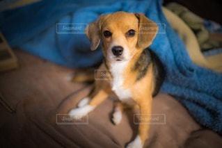 犬の写真・画像素材[30484]
