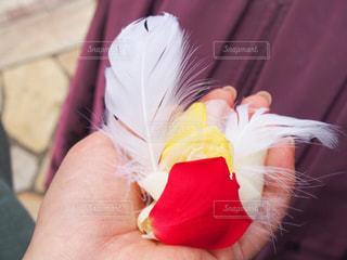 羽根をあなたへの写真・画像素材[849901]
