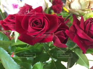 バラの花束の写真・画像素材[847205]