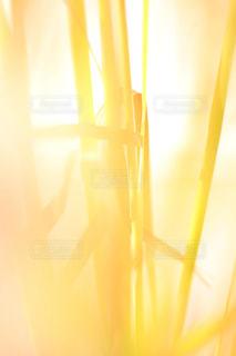 光のクローズ アップ - No.847305