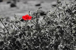 赤と黒 - No.847328