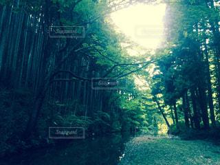 森を流れる川 - No.847329